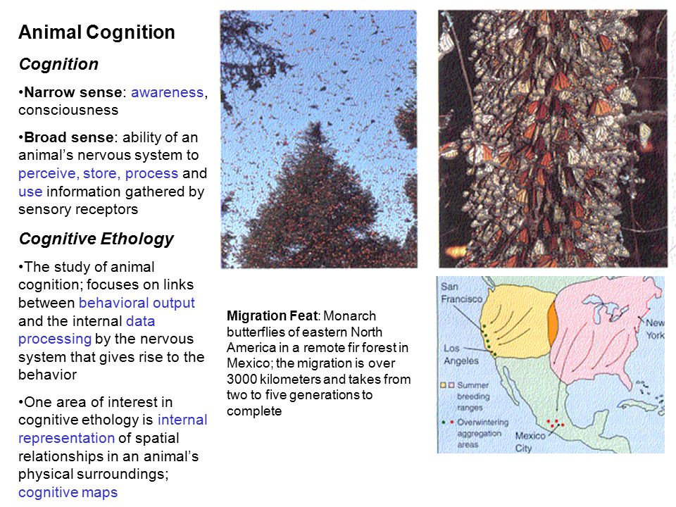 Animal Cognition Cognition Cognitive Ethology