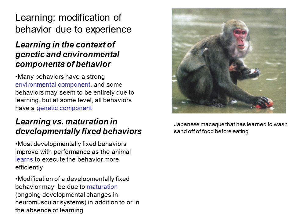 Learning: modification of behavior due to experience
