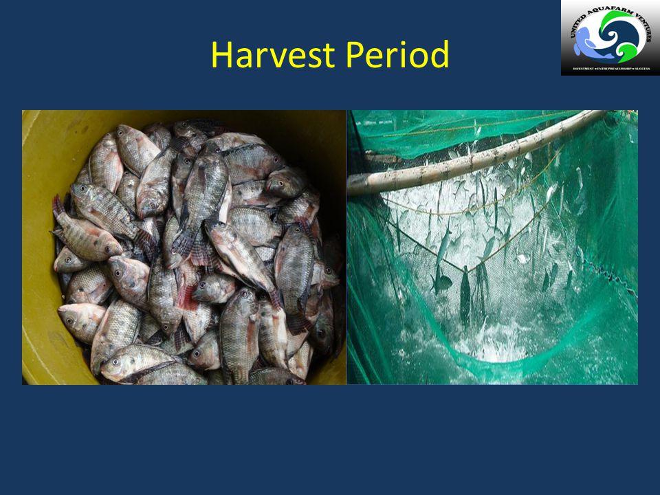 Harvest Period