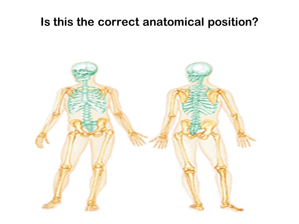 Is this the correct anatomical position