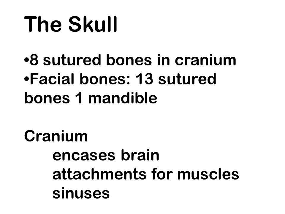 The Skull 8 sutured bones in cranium