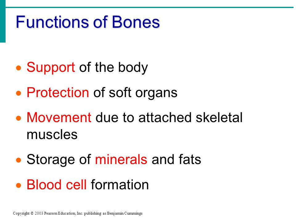 Functions of Bones Support of the body Protection of soft organs