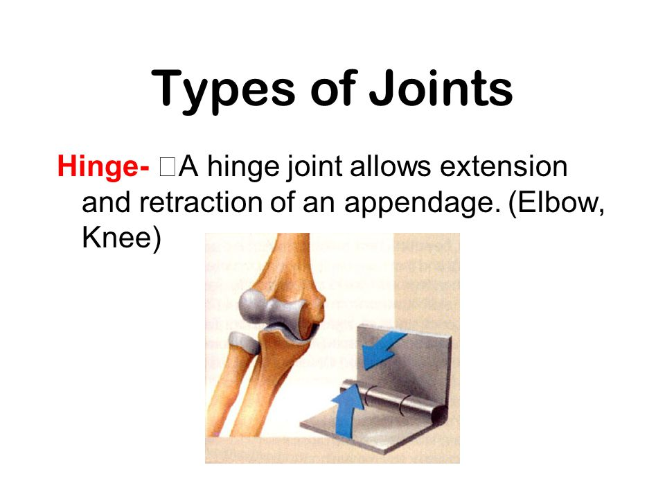 Types of Joints Hinge- A hinge joint allows extension and retraction of an appendage.