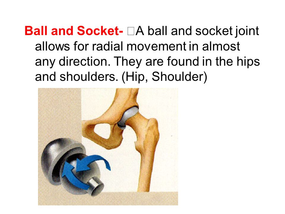 Ball and Socket- A ball and socket joint allows for radial movement in almost any direction.
