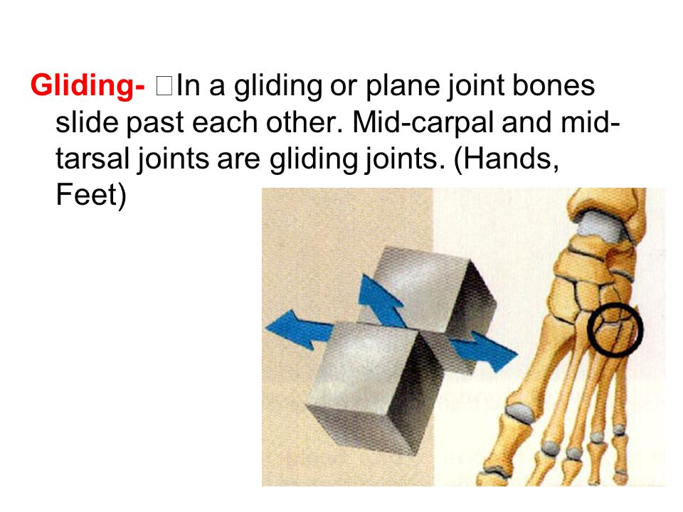 Gliding- In a gliding or plane joint bones slide past each other