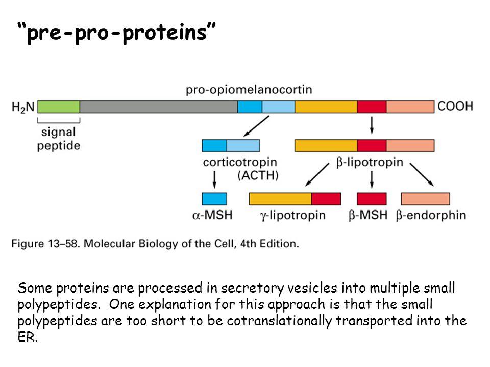 pre-pro-proteins