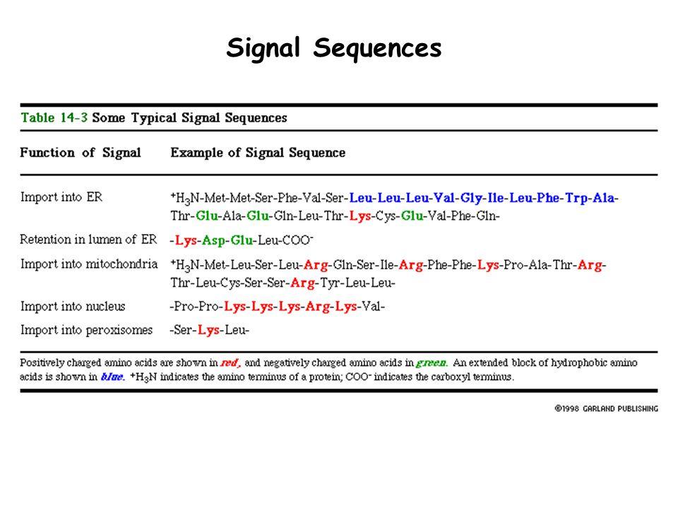 Signal Sequences