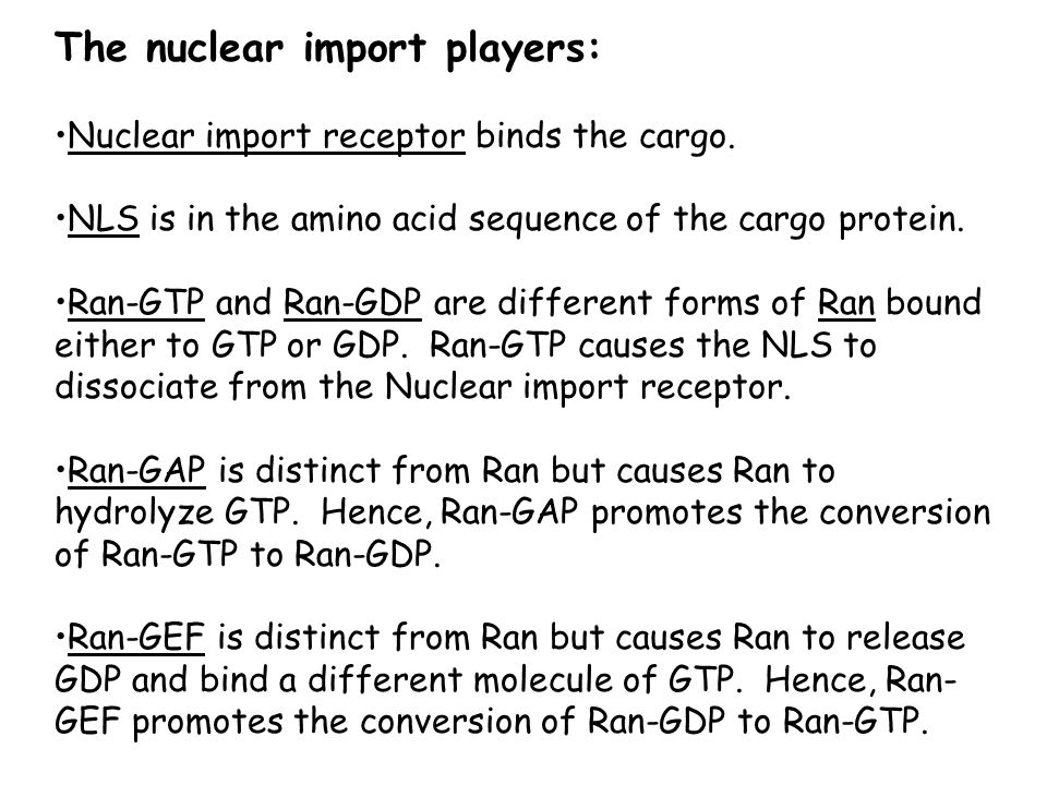 The nuclear import players: