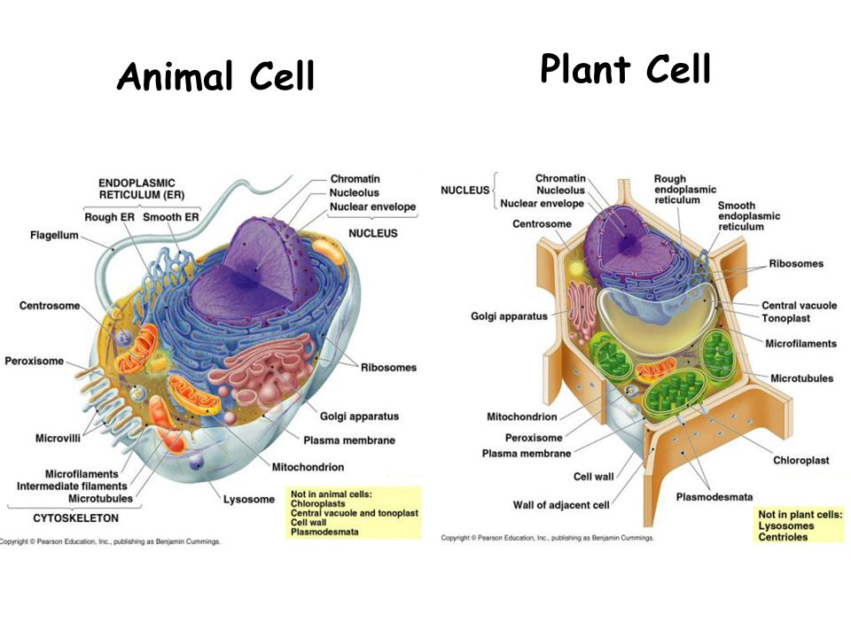 Archive of all online content  Plant Cell