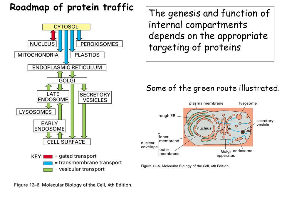 Roadmap of protein traffic
