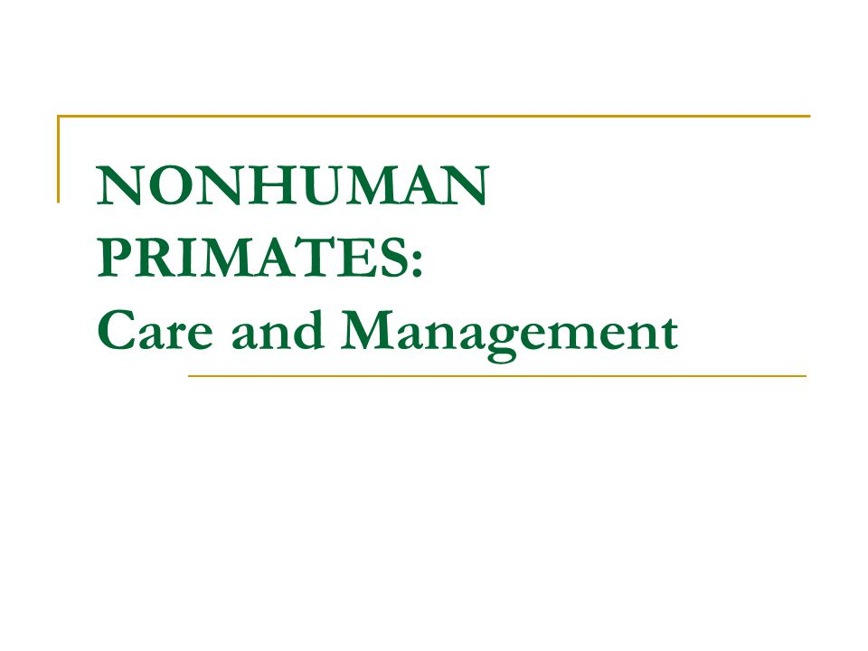 NONHUMAN PRIMATES: Care and Management