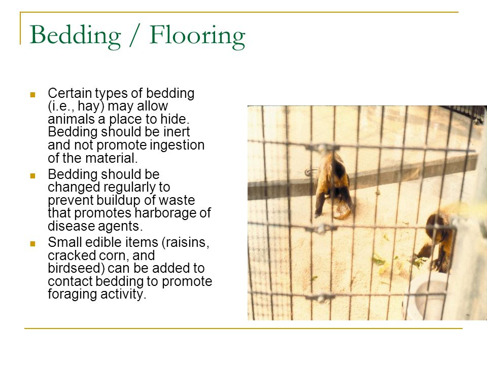 Bedding / Flooring