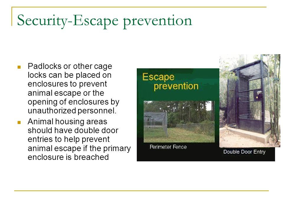 Security-Escape prevention