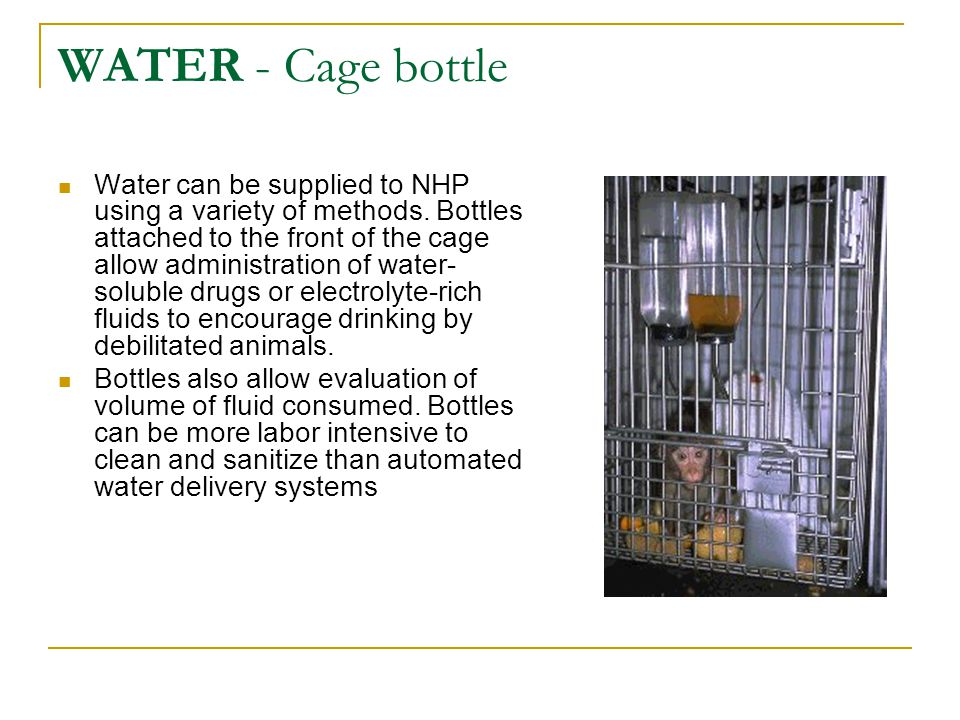 WATER - Cage bottle