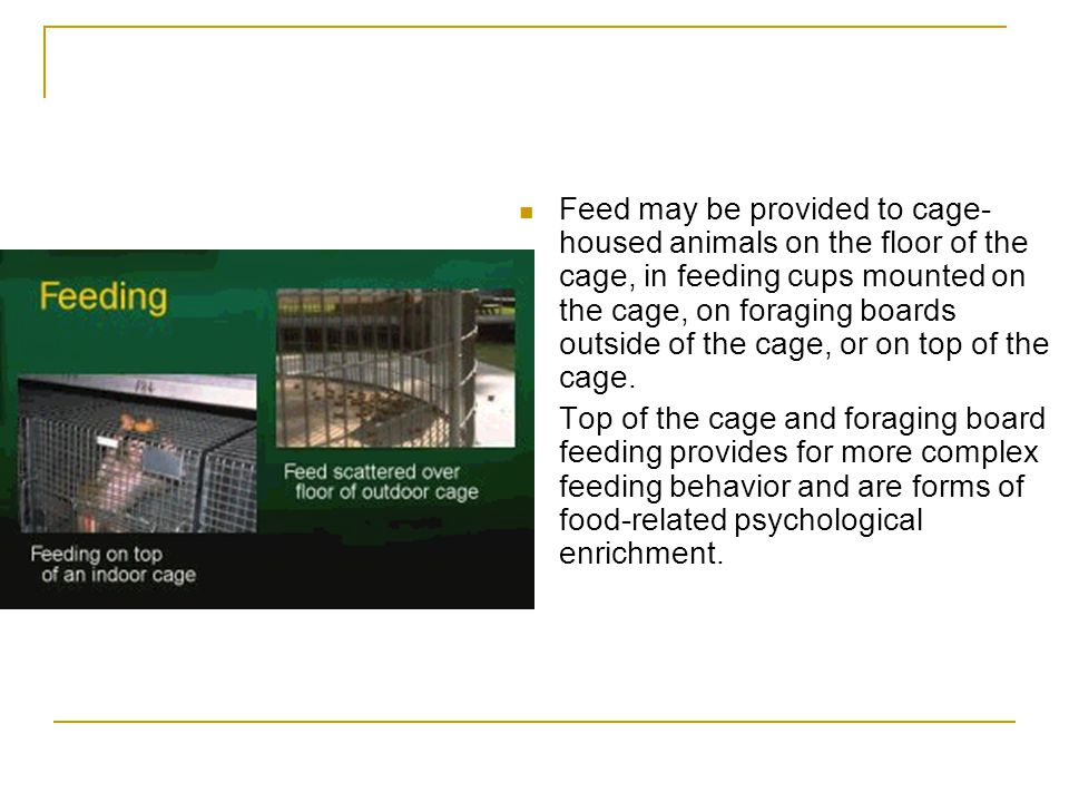 Feed may be provided to cage-housed animals on the floor of the cage, in feeding cups mounted on the cage, on foraging boards outside of the cage, or on top of the cage.