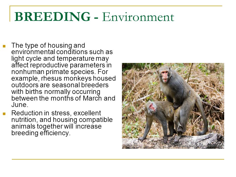 BREEDING - Environment