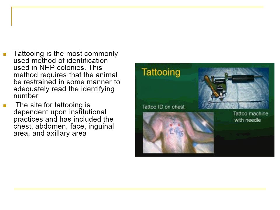 Tattooing is the most commonly used method of identification used in NHP colonies. This method requires that the animal be restrained in some manner to adequately read the identifying number.