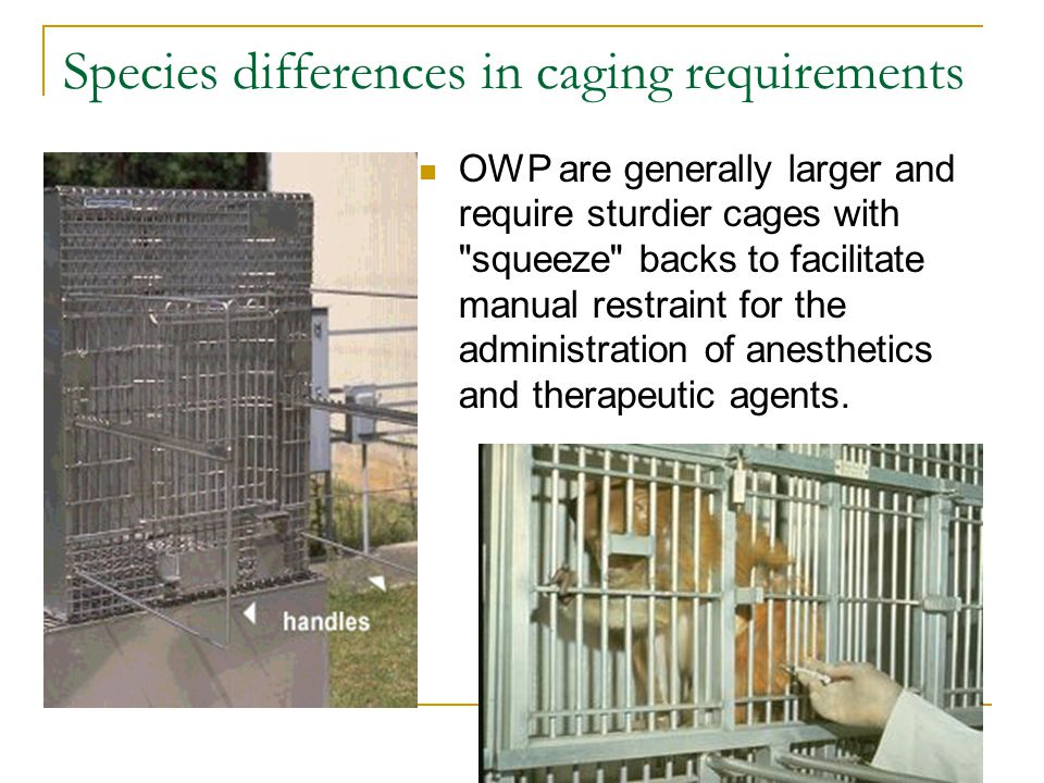 Species differences in caging requirements