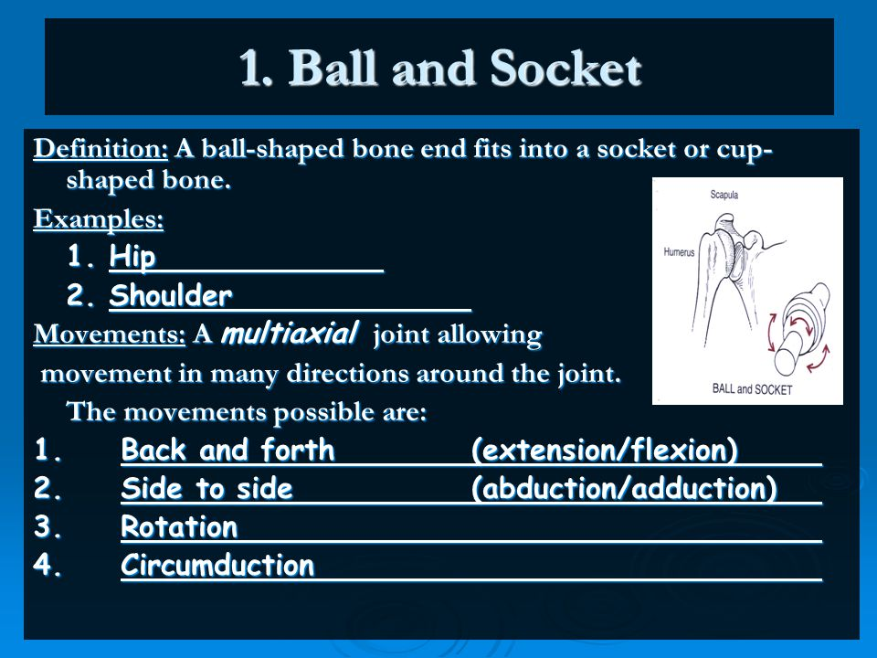 1. Ball and Socket Definition: A ball-shaped bone end fits into a socket or cup-shaped bone. Examples: