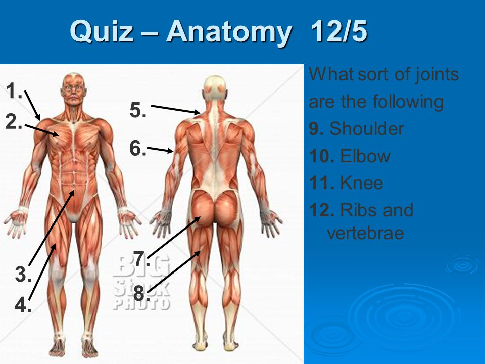 Quiz – Anatomy 12/5 1. 5. 2. 6. 7. 3. 8. 4. What sort of joints