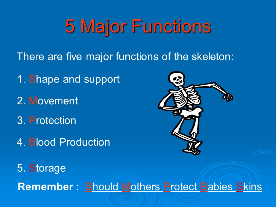 5 Major Functions There are five major functions of the skeleton: