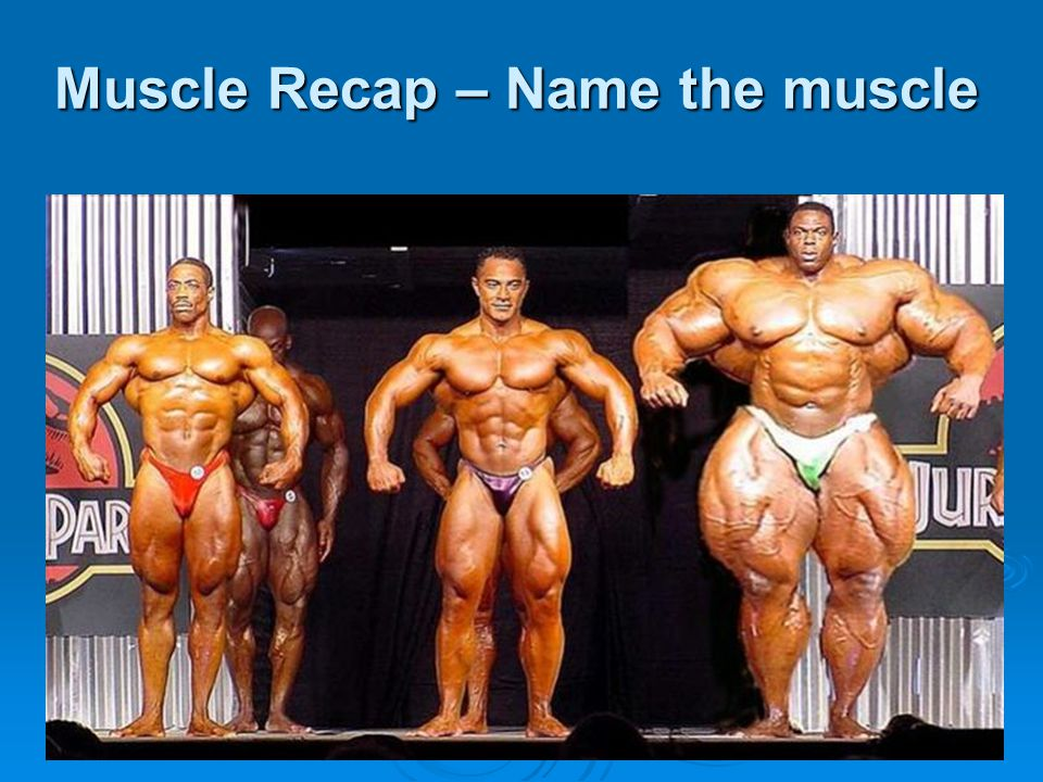 Muscle Recap – Name the muscle
