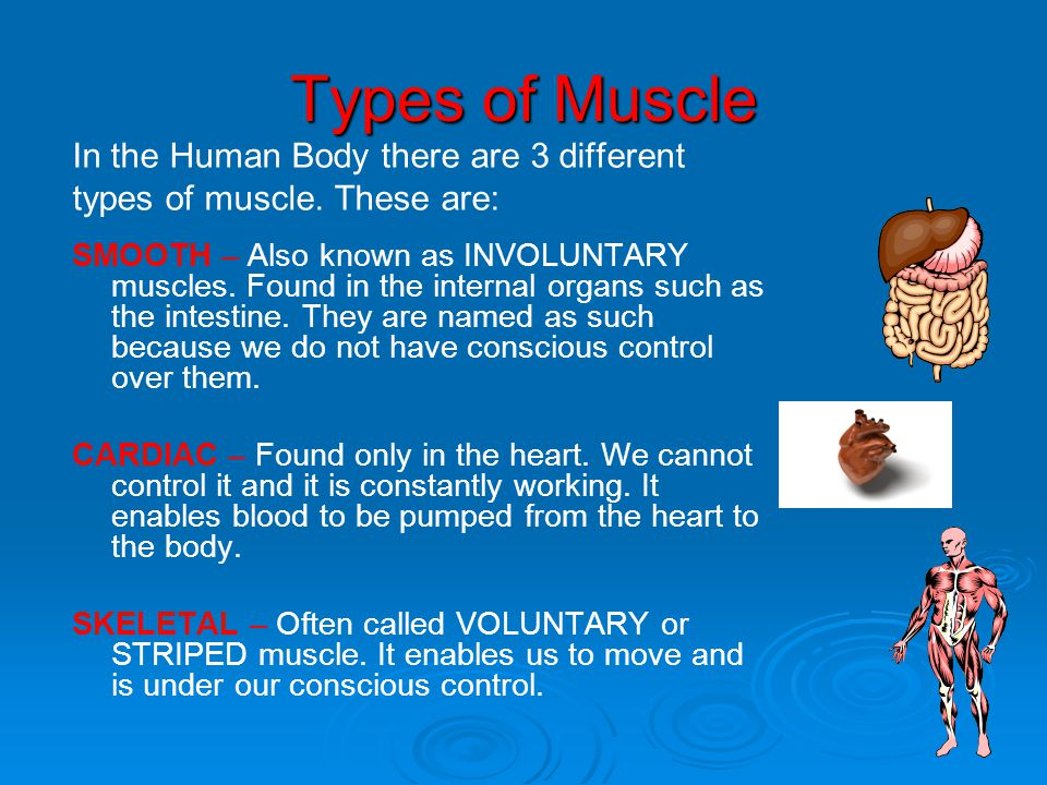 Types of Muscle In the Human Body there are 3 different