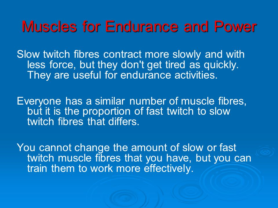 Muscles for Endurance and Power