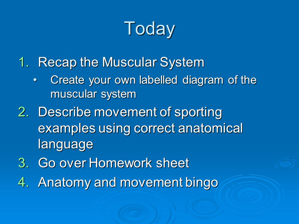 Today Recap the Muscular System