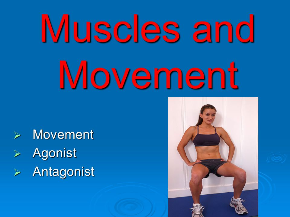 Muscles and Movement Movement Agonist Antagonist