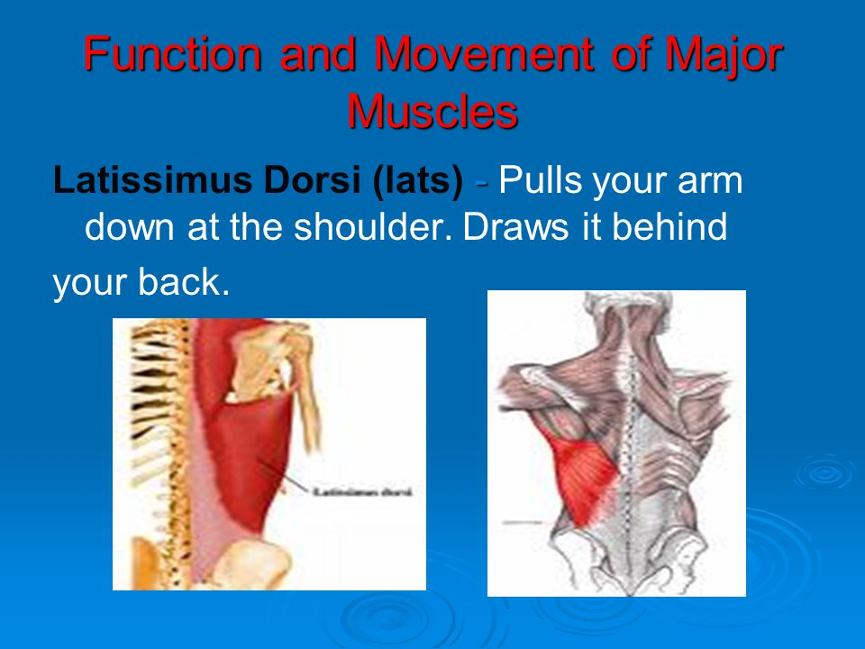 Function and Movement of Major Muscles