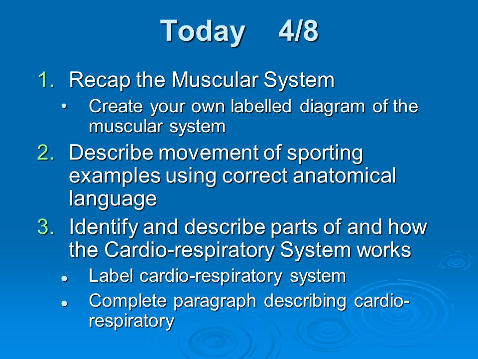Today 4/8 Recap the Muscular System