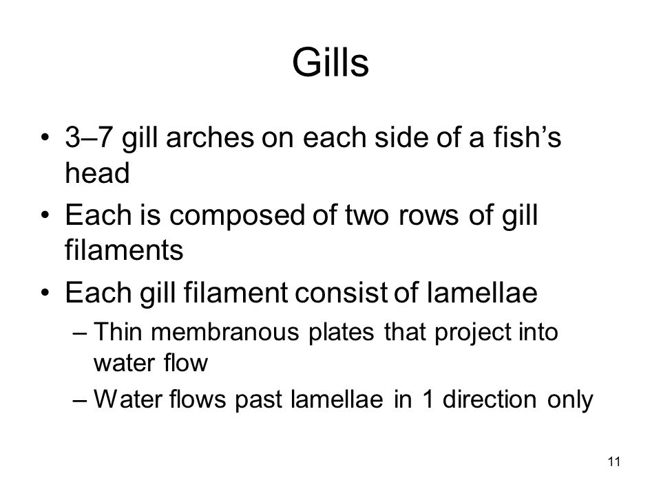 Gills 3–7 gill arches on each side of a fish's head
