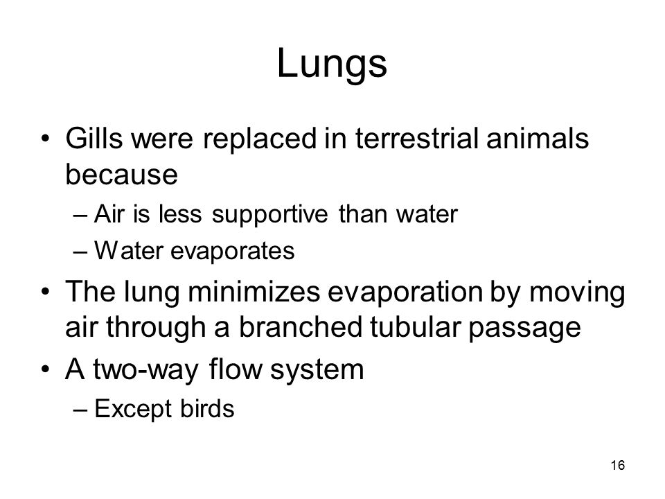 Lungs Gills were replaced in terrestrial animals because