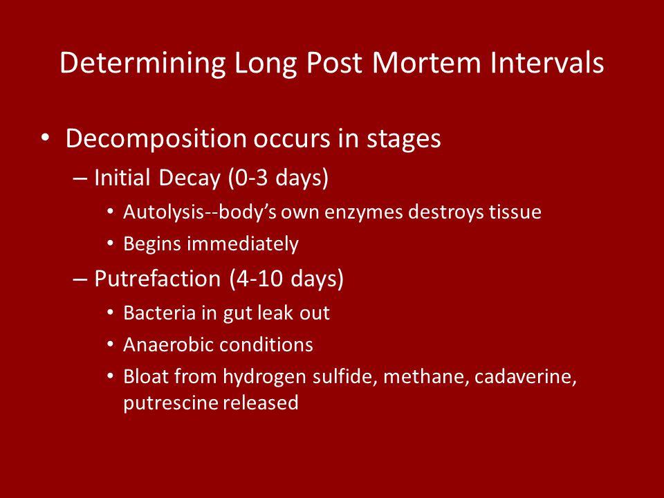 Determining Long Post Mortem Intervals