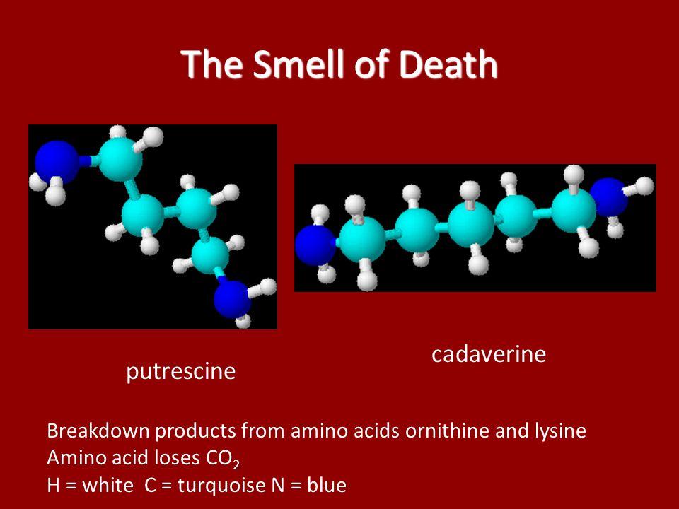 The Smell of Death cadaverine putrescine