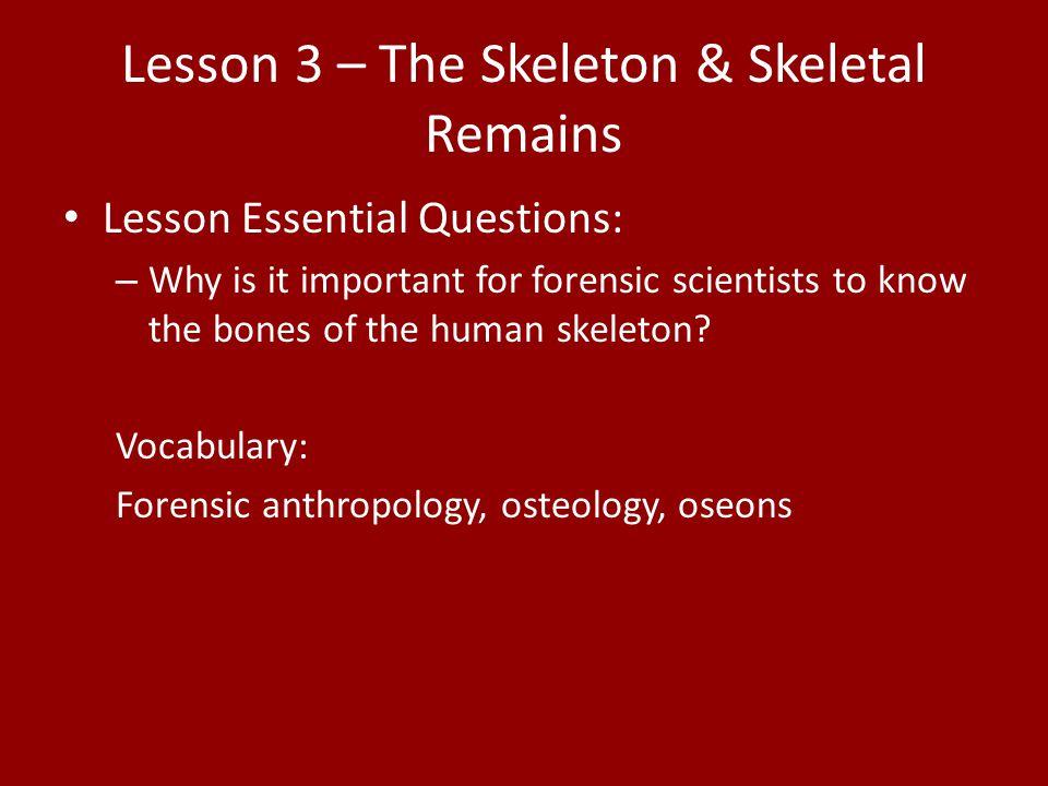 Lesson 3 – The Skeleton & Skeletal Remains
