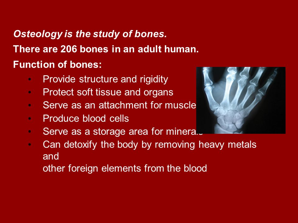 Osteology Osteology is the study of bones.