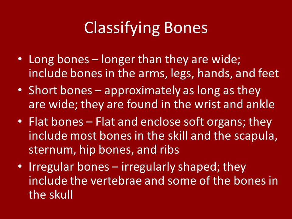 Classifying Bones Long bones – longer than they are wide; include bones in the arms, legs, hands, and feet.