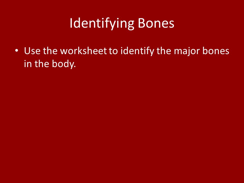 Identifying Bones Use the worksheet to identify the major bones in the body.