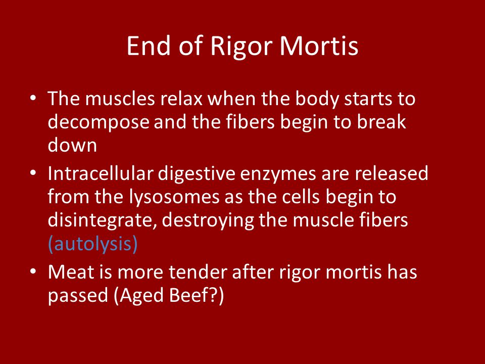 End of Rigor Mortis The muscles relax when the body starts to decompose and the fibers begin to break down.