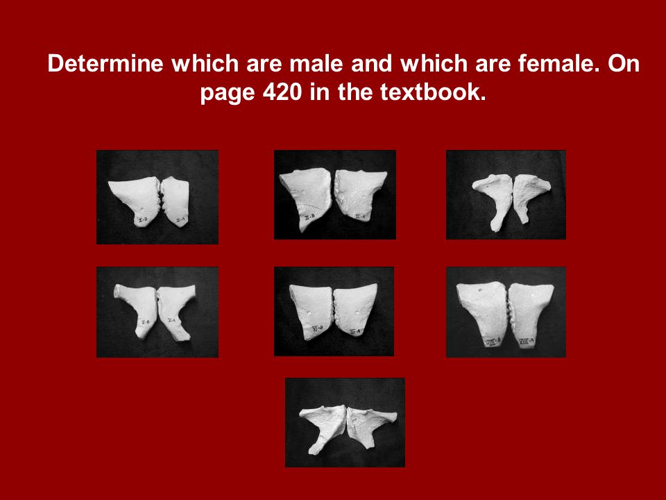 Chapter 12 Determine which are male and which are female. On page 420 in the textbook. Kendall/Hunt