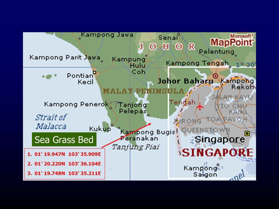 Sea Grass Bed 01' 19.947N 103' 35.909E 01' 20.220N 103' 36.104E 01' 19.748N 103' 35.211E
