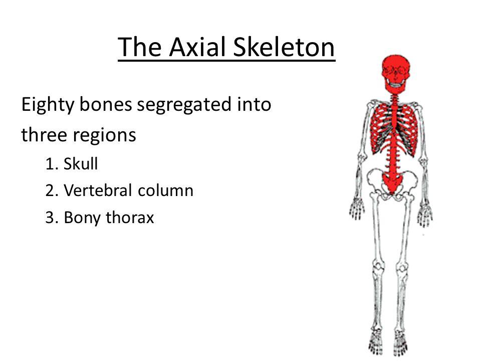 The Axial Skeleton Eighty bones segregated into three regions 1. Skull
