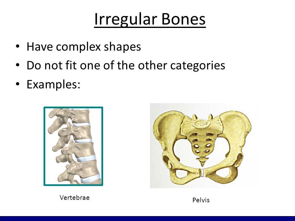 Irregular Bones Have complex shapes