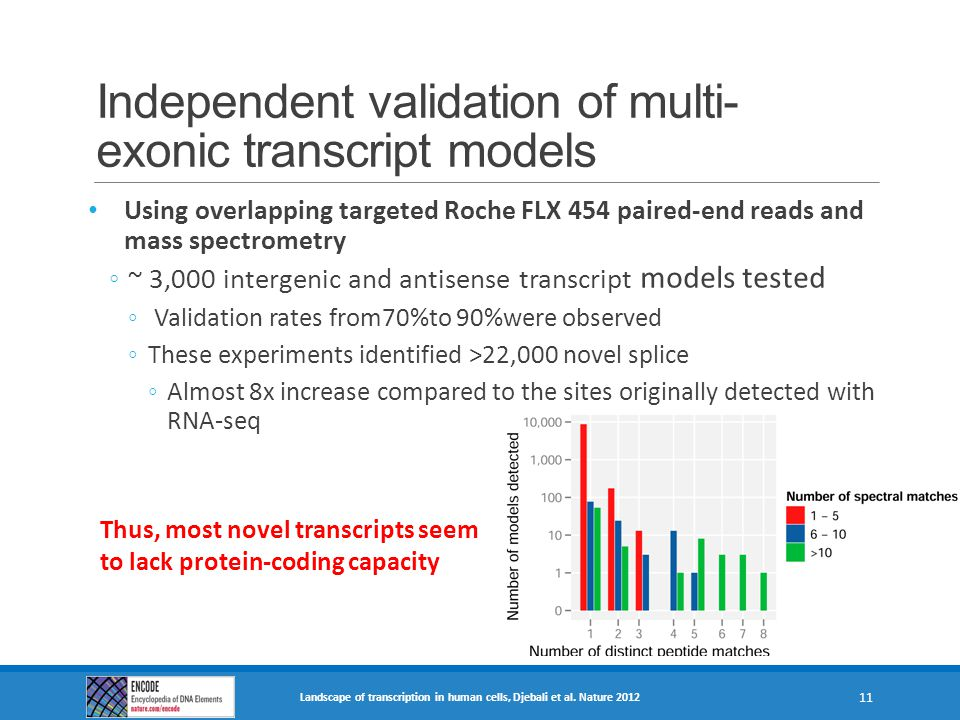 Independent validation of multi-exonic transcript models