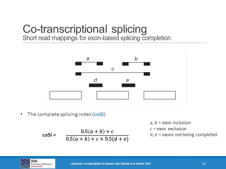 Co-transcriptional splicing Short read mappings for exon-based splicing completion