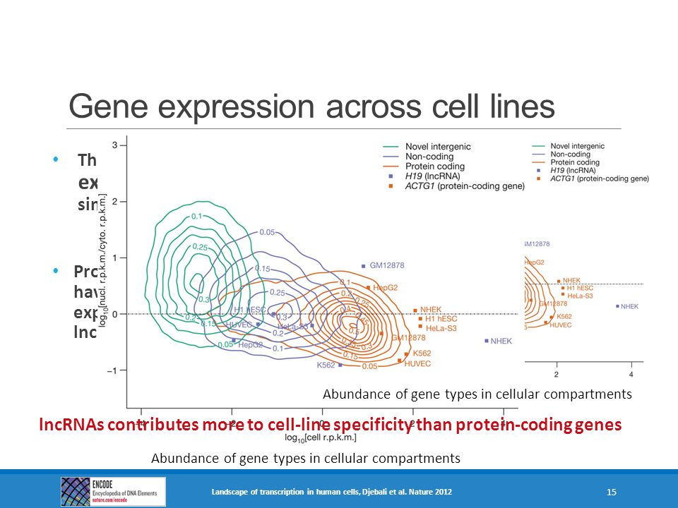 Gene expression across cell lines