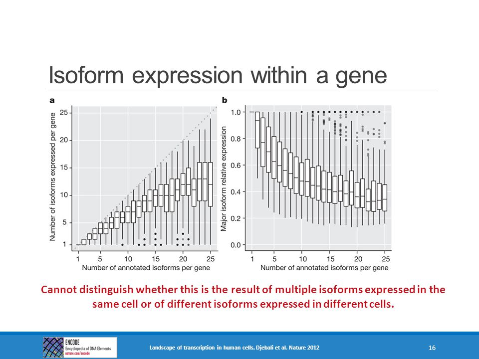 Isoform expression within a gene