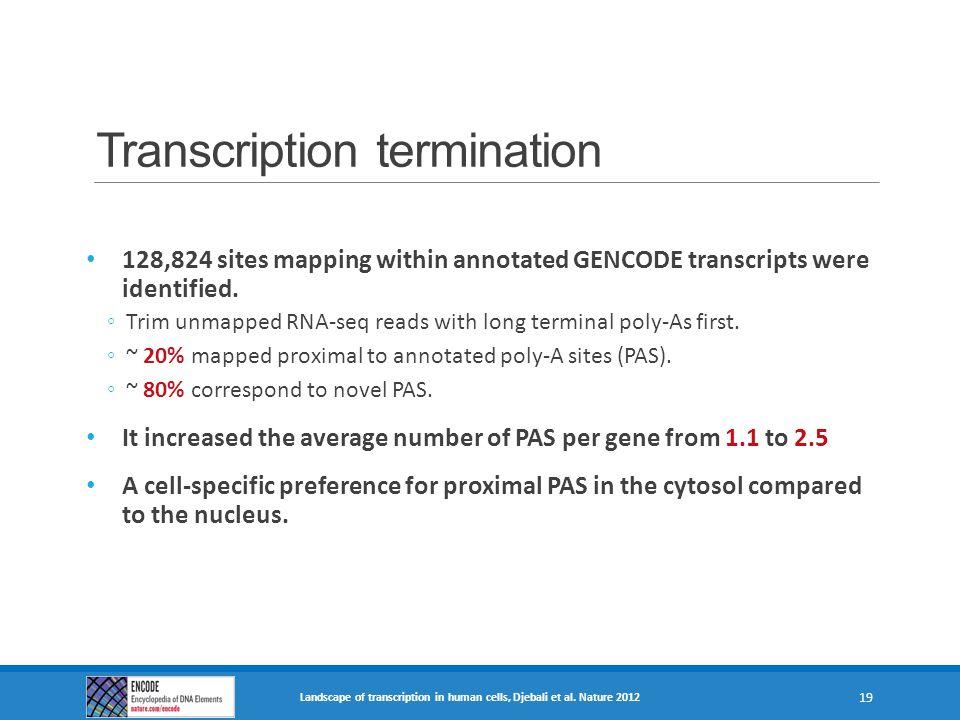Transcription termination